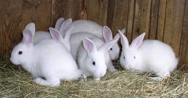أسعار الأرنب في بورصة الأرانب اليوم مصر 2021