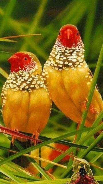 Bird pics