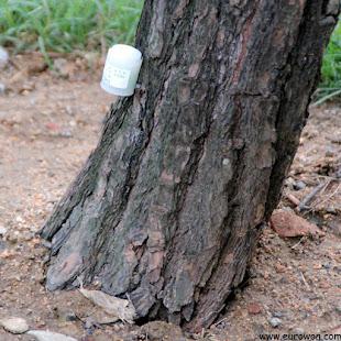 Árbol medicamentado en Seúl