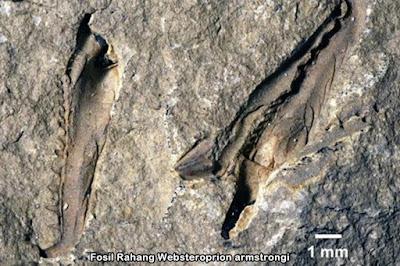 Fosil Rahang Cacing Prasejarah Raksasa Ditemukan