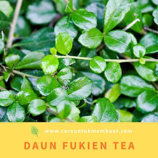 Daun Fukien Tea