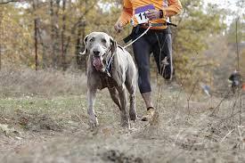 terreno irregular para cães