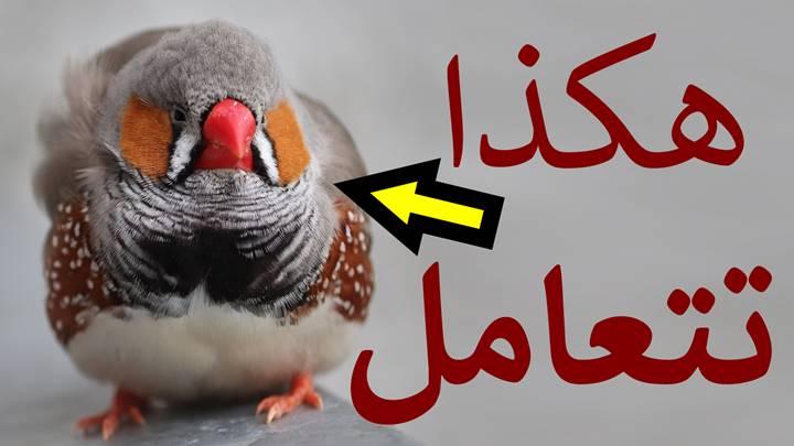 طريقة التعامل مع الطيور المريضة