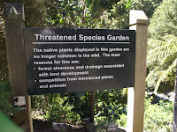 Threatened species garden - Wellington Botanic Garden, New Zealand