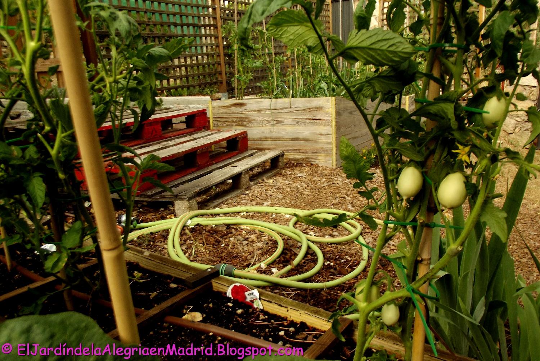 El jard n de la alegr a tomates berenjenas pimientos for Cancion el jardin de la alegria