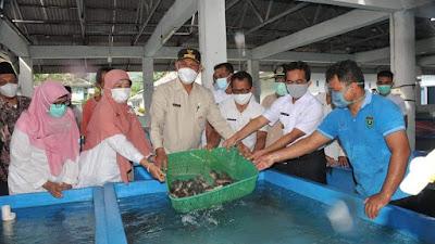 Gubernur Mahyeldi Usaha Ikan Kerapu Sumbar Sangat Menjanjikan