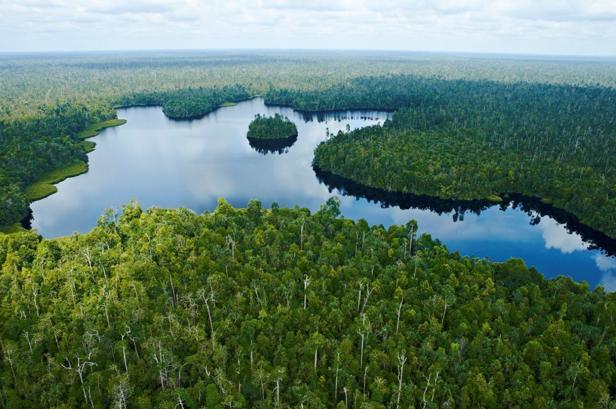 Perusahaan Sukanto Tanoto Jaga Keanekaragaman Hayati Riau Lewat Program RER