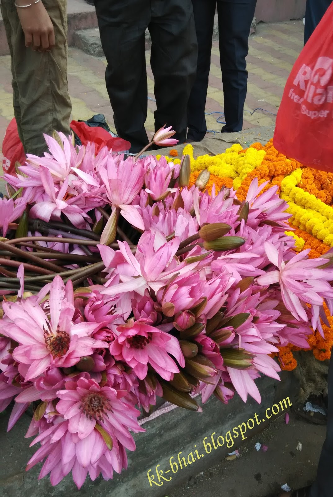 Puja flowers and other things used in puja worship tagetes it is also a favorite flower of goddess lakshmi due to its golden color during festival of deepawali lakshmi puja the demand of genda flowers increases izmirmasajfo
