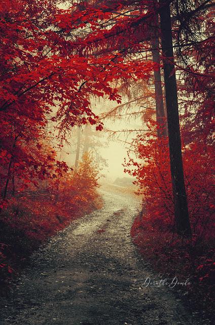 Herbstimpression, photoart, Fotokunst, Sauerland, art, Dorothe Domke, autumn, artist