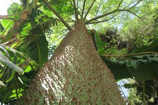 Immagini dell'Orto Botanico