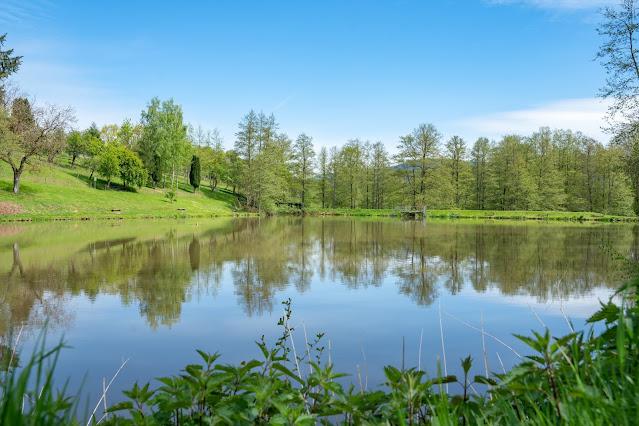 Premiumwanderweg Murgleiter | Etappe 1 von Gaggenau nach Gernsbach | Wandern nördlicher Schwarzwald 26