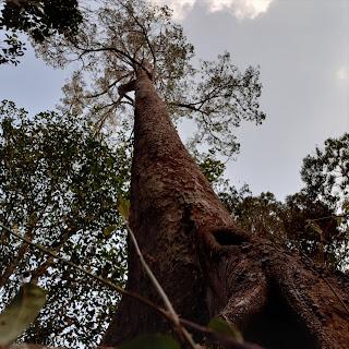 Pohon di hutan pegunungan meratus