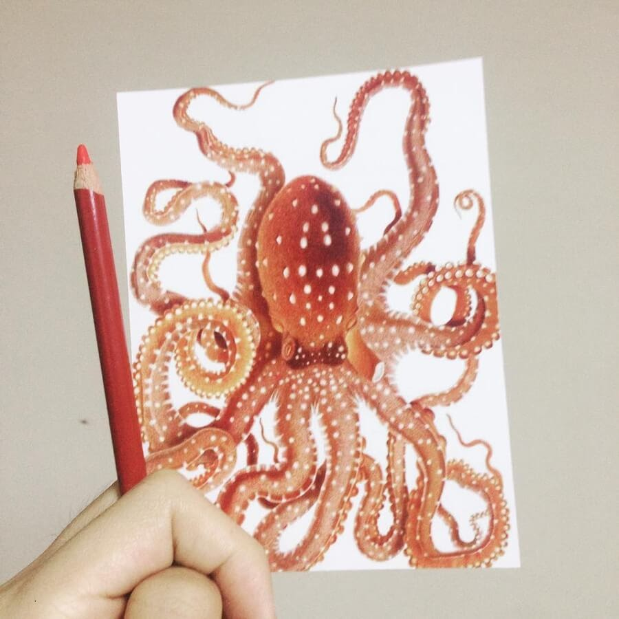 07-Octopus-Guanyu-www-designstack-co