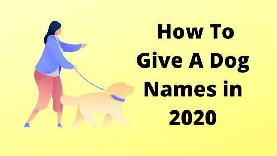 How To Give A Dog Names in 2020