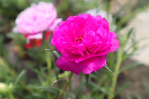 Foto bunga yang bagus dan bokeh