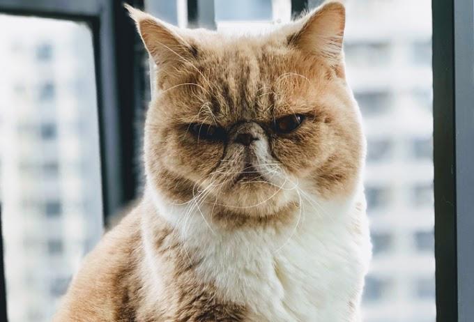 Petua Elak Kucing Berak & Kencing Merata Tempat Tinggalkan Bau Busuk