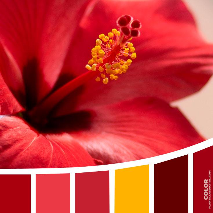color_516
