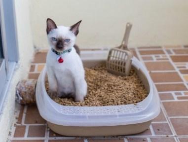 6 Arti Mimpi Melihat Kucing Tanpa Kepala Menurut Primbon Jawa Terlengkap