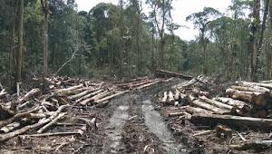 Presiden Jokowi Diminta Lihat Pengrusakan Parah Hutan dan Lingkungan di KDT