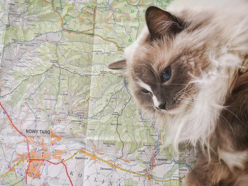 Nowy Targ, Polska, podróże, zwiedzanie, Kot Warszawski, koci podróżnik, Tatry, polskie góry