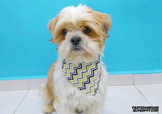 lenço cachorro