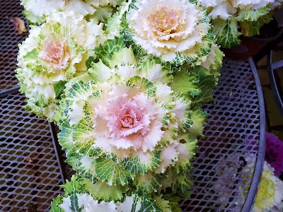 цветники,клумбы,сад,