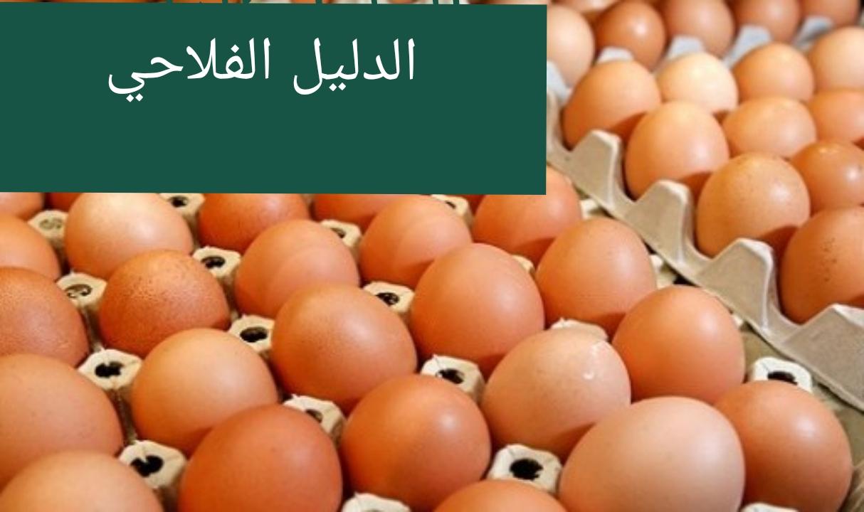 طريقة فحص البيض المخصب