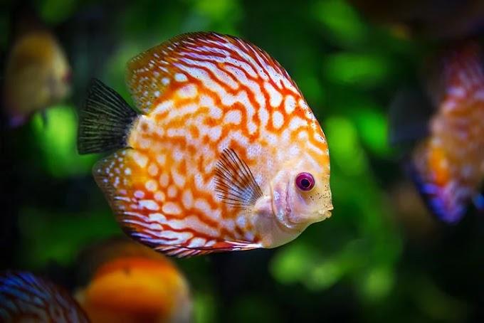 मछली के बारे में 30 रोचक तथ्य भाग-2 - anokhagyan.in