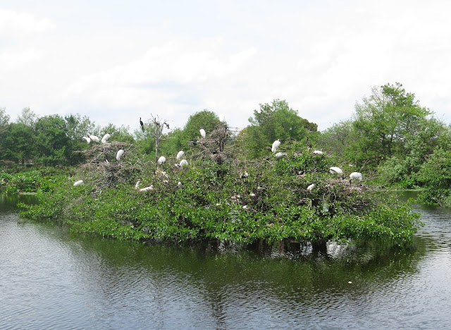 Wood Storks - Wakodahatchee Wetlands, Florida
