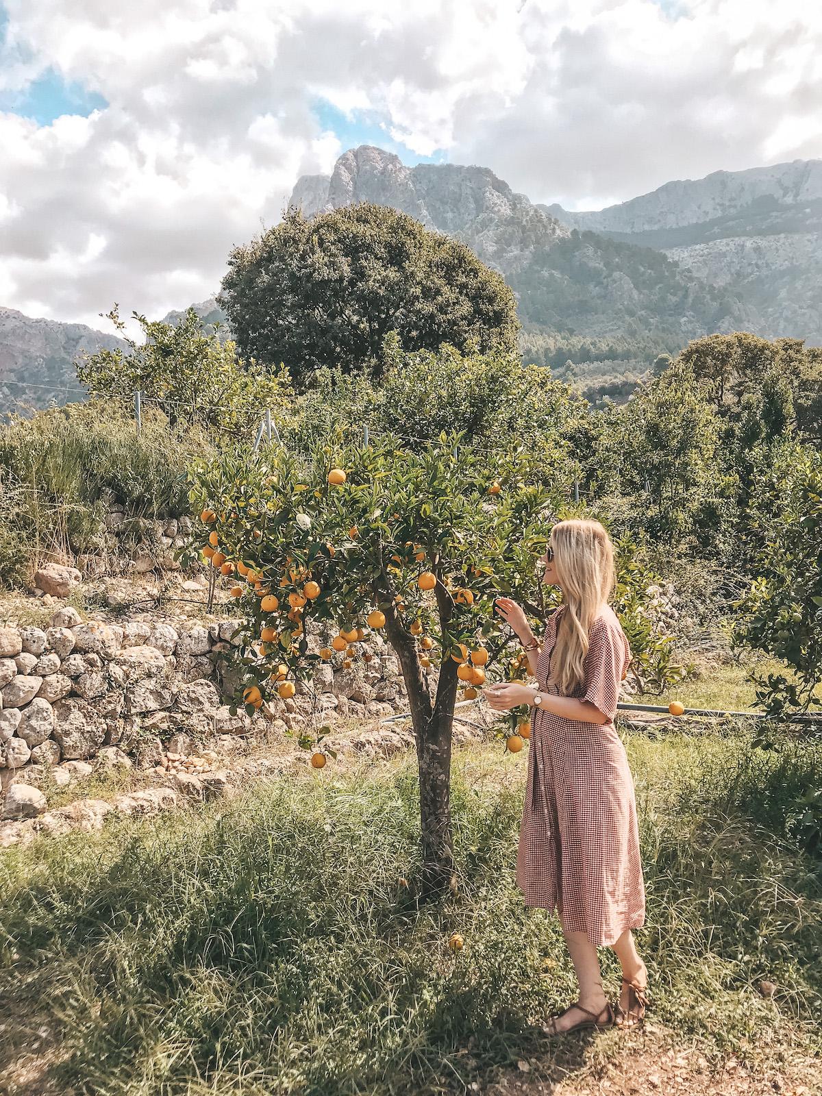 Sehenswerte Orte Mallorca Dörfer Städte Traveldiary Reisetipps Empfehlung Travelblog Orangental Soller Orangenfarm Ecovinyassa Tour