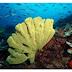 Diving di Ternate - Wisata Bahari