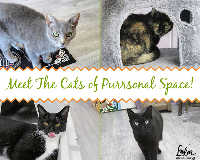 purrsonal space |cat cafes
