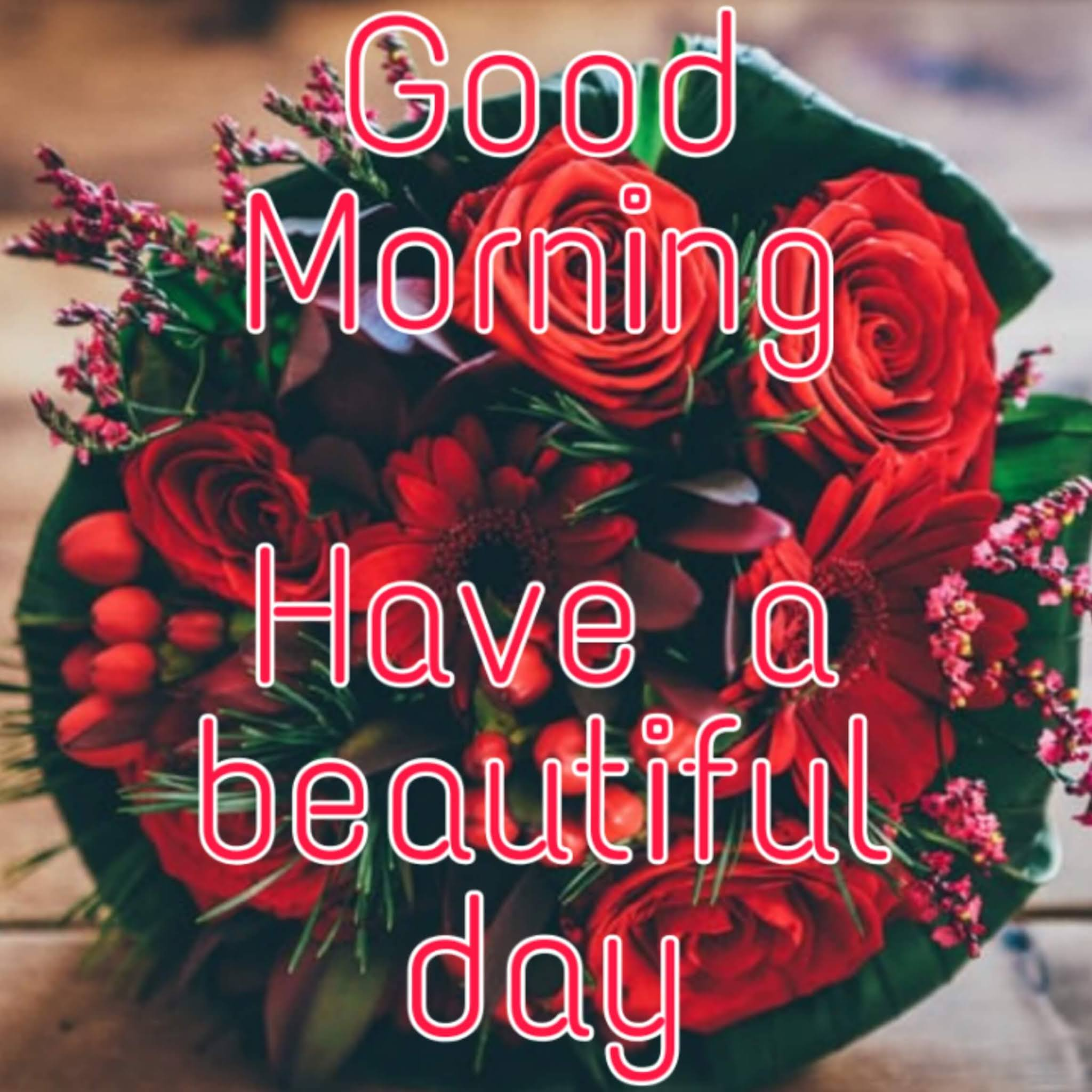 50 Good Morning Red Rose Images Free Download Best Wishes Image