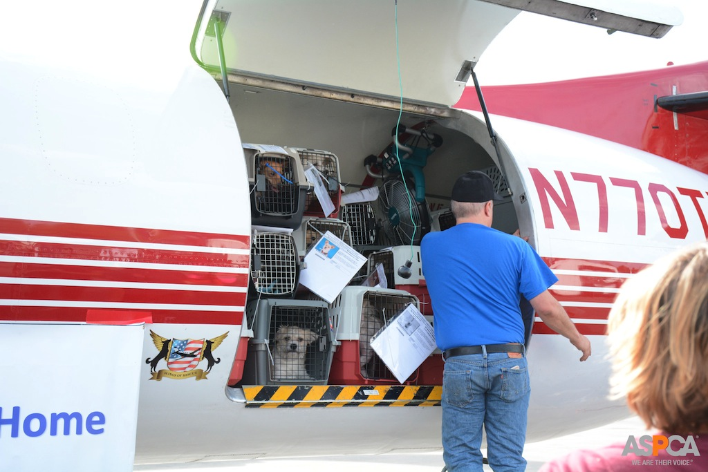 Wings of Rescue flies 150 dogs and cats to freedom in NJ #BTC4A