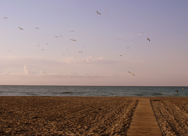 Gaviotas en la playa al amanecer