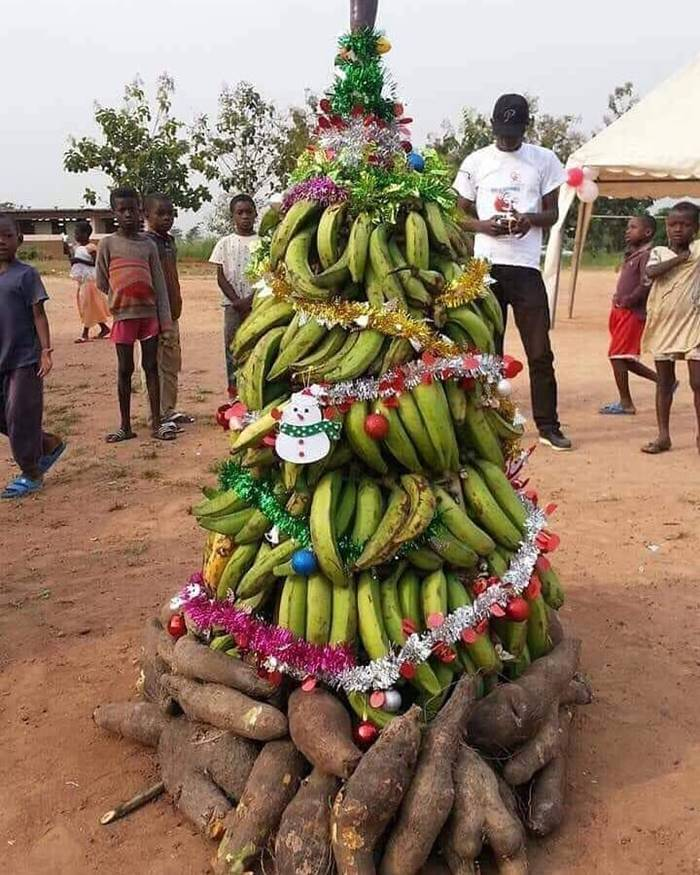 When Christmas trees do not grow, but there are many bananas