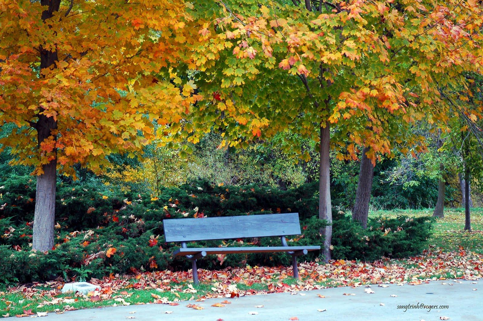 Beautiful Nature Wallpapers Alees Blog