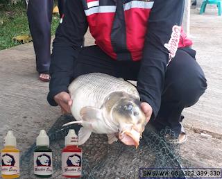 Essen Ikan Mas Subang Khusus Galatama
