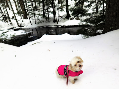 Favorite Pet Travel photos on the WW Blog Hop!