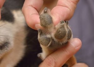 massagem nas patas dos cães