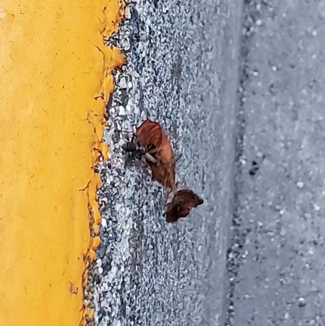 アリが葉っぱを運んでる