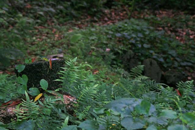 サシチムイの拝所の写真