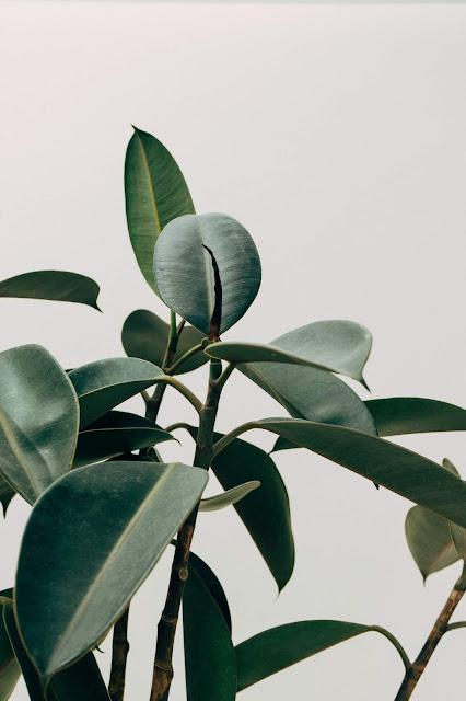 tumblr plants