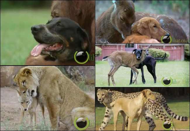 10 Pasangan Binatang Beda Spesies yg paling Aneh di Dunia