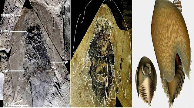 Ancient Voracious Predator Species Found in Canadian Shale