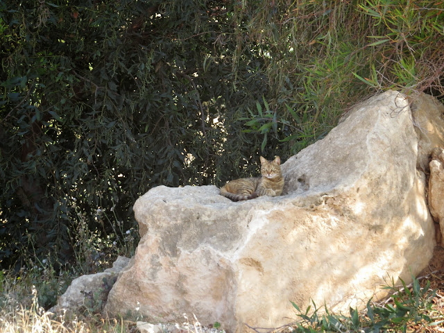 Cyprus Road Trip: Cat on a rock at the Tomb of the King of Paphos