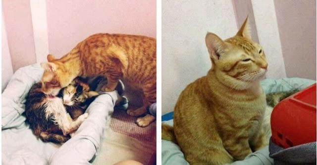 Кот так трогательно поддержал свою кошечку во время родов, что стал звездой Интернета!