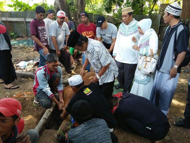 Pengurus dan simpatisan Partai Golkar Kota Banjarbaru punya cara tersendiri untuk merayakannya. Tahun ini, hari raya iduladha 1437 H dirayakan dengan cara berbagi hewan kurban kepada sesama.