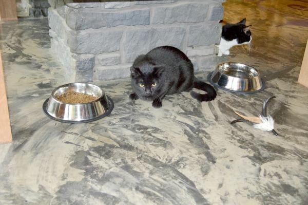 meowtropolitan seattle cat café