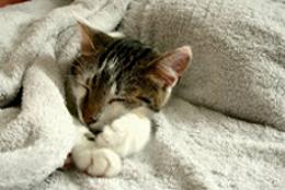 Micio che dorme